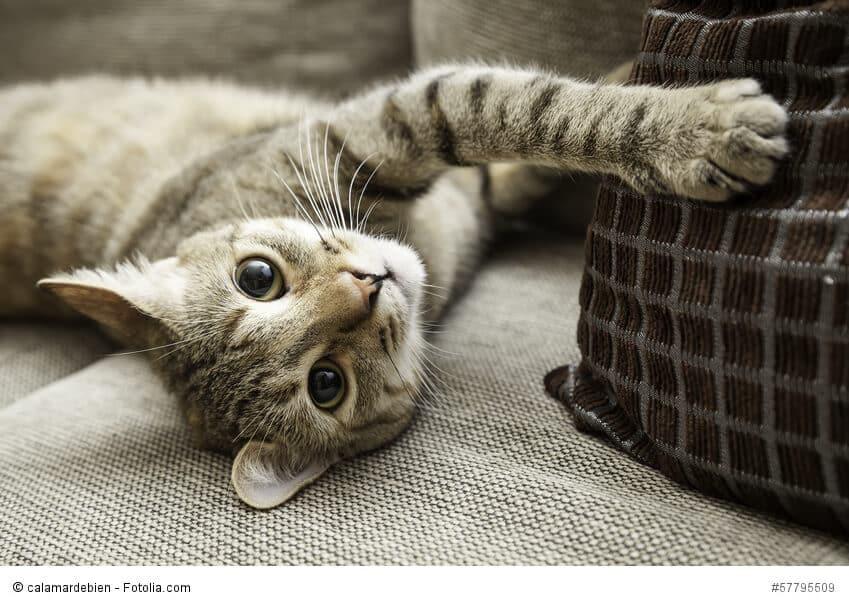 Comment éliminer l'odeur de pipi de chat d'un livre?