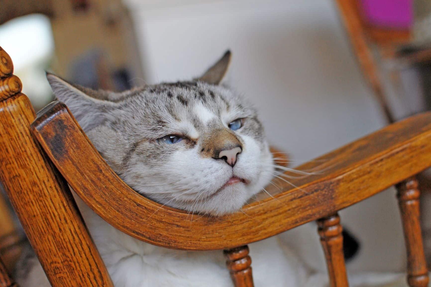 Est-ce qu'une chatte a l'impression de mourir?