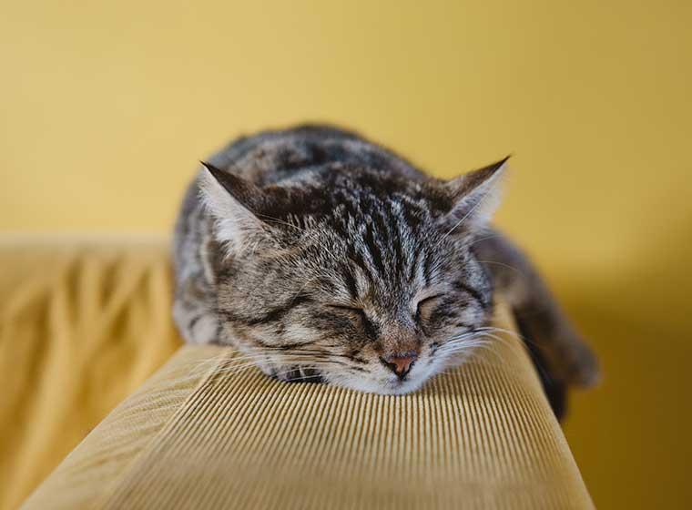 Qu'est-ce qui peut nous rendre allergiques aux chats?