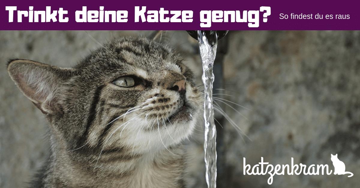 Pourquoi mon chat ne boit-il pas d'eau?